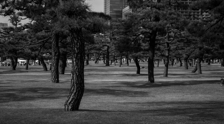 Trees and shadows in the Kokyo Gaien National Garden